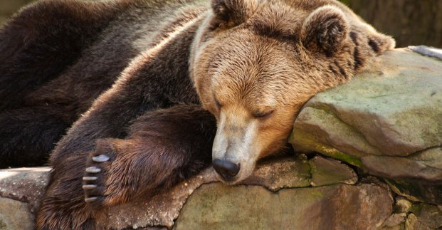 Медведи намекают: в Харькове скоро похолодает
