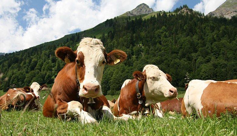 В Украине станет намного больше мяса и молока по умеренным ценам