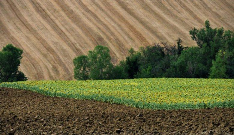 Суд лишил псевдофермера земельных участков площадью 414 га и стоимостью 46 млн. грн.