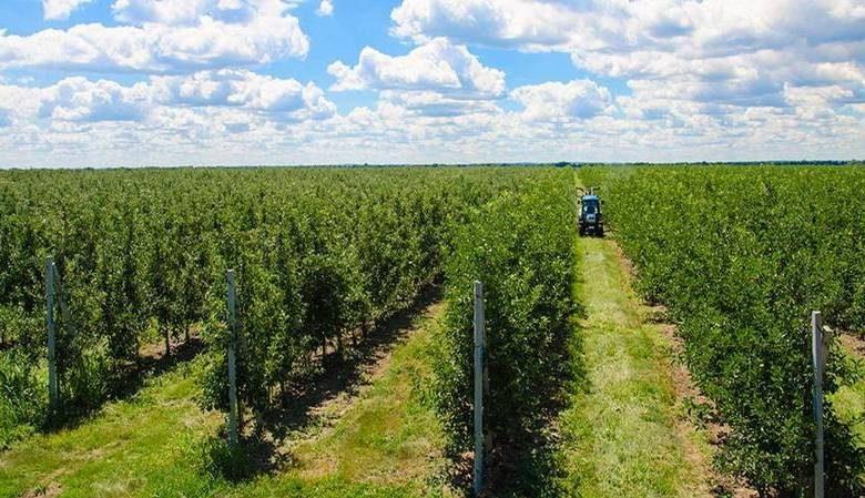 Развитие фермерства в Харьковской области: реалии и перспективы