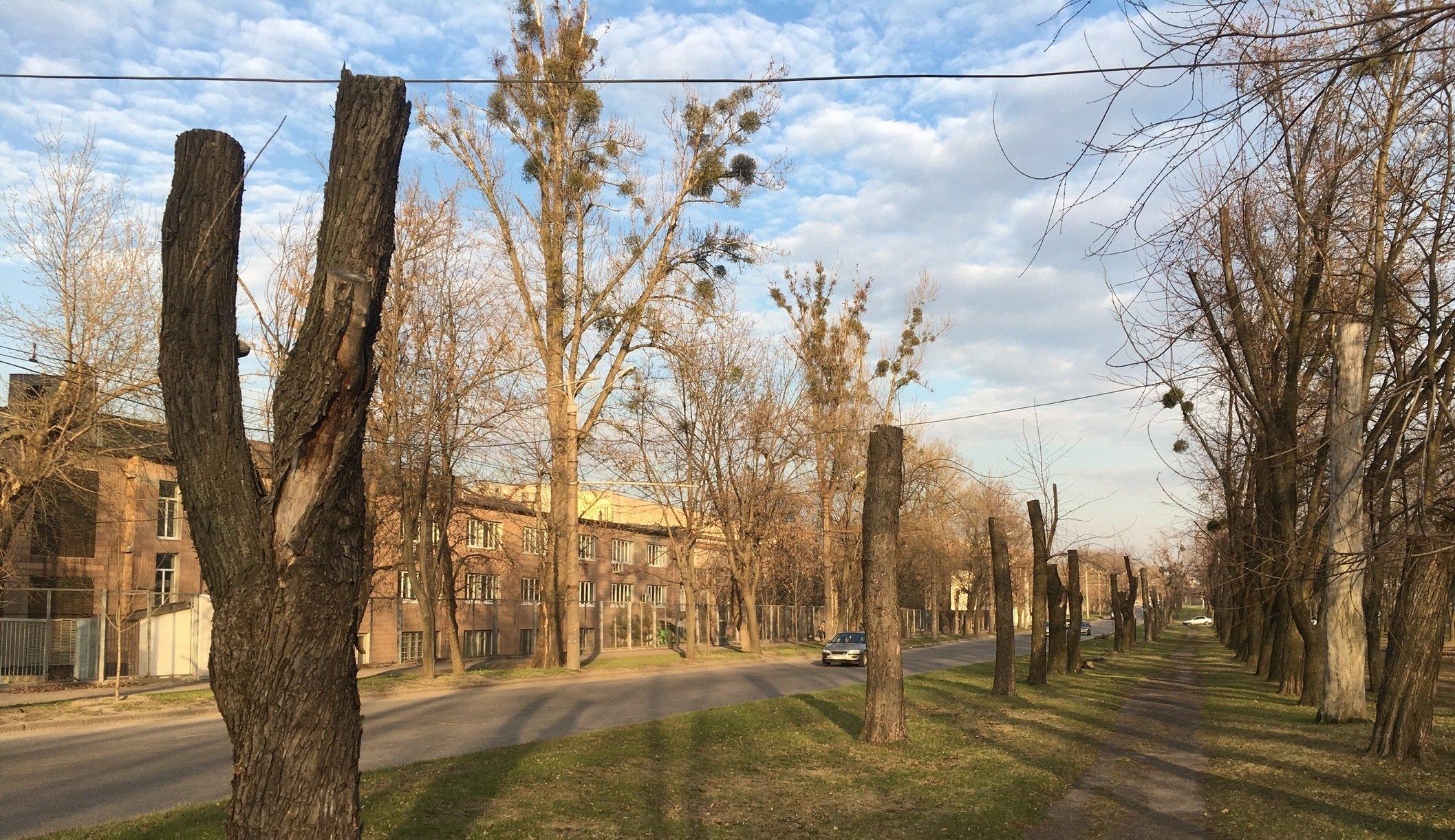 Дендрофобия харьковских чиновников: пациент излечению не подлежит?