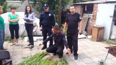 Харьковчанин вырастил плантацию конопли у себя дома (фото)