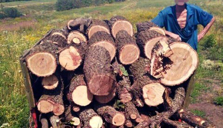 В Харьковской области мужчина незаконно рубил лес