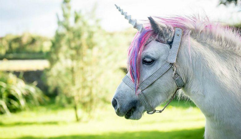 По Харькову бегает пони, переодетый в единорога (видео)