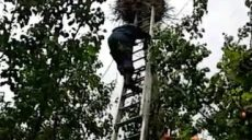 В Харьковской области сотрудники ГСЧС спасли птенца аиста (фото)