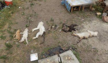 В Харькове сотрудники полиции разыскивают причастных к убийству животных из частного приюта (видео)