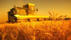 Дефицит хлеба Харьковшине не грозит, в регионе полностью сформирован запас пшеницы (видео)