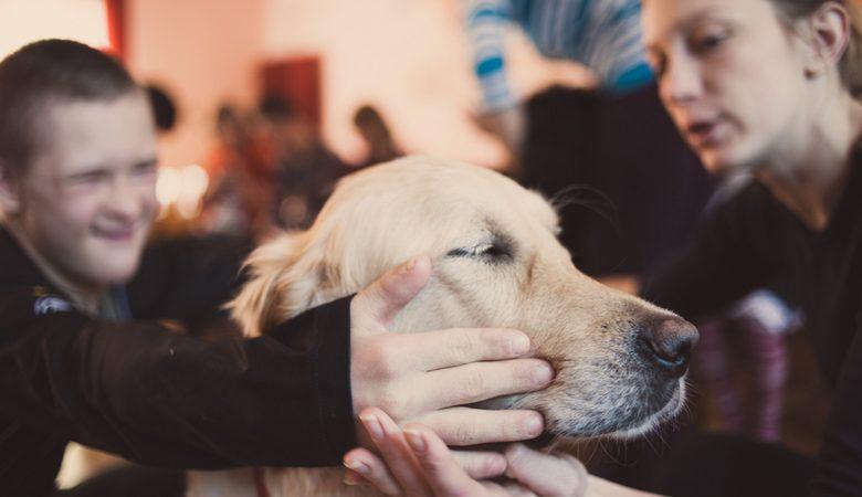 Терапия от четверолапых друзей. Собаки помогают подросткам справиться с наркозависимостью (видео)