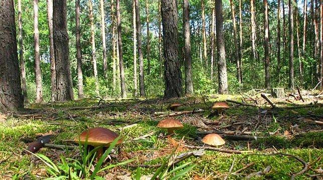 В Дергачах чиновники незаконно передали гражданам участки леса