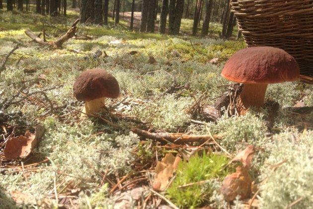 В лесу разыскали грибника из Харькова