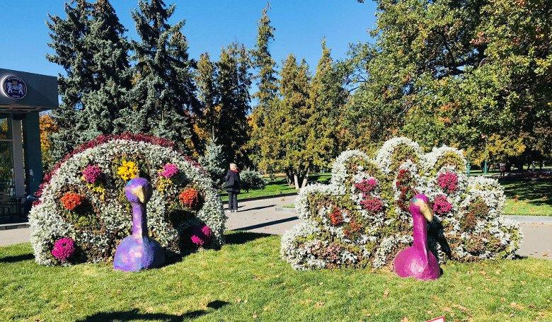 Павлины в центре Харькова. Группа студентов создала цветочную композицию