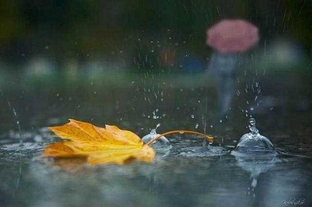 С понедельника Харьков накроет дождливая погода (прогноз)