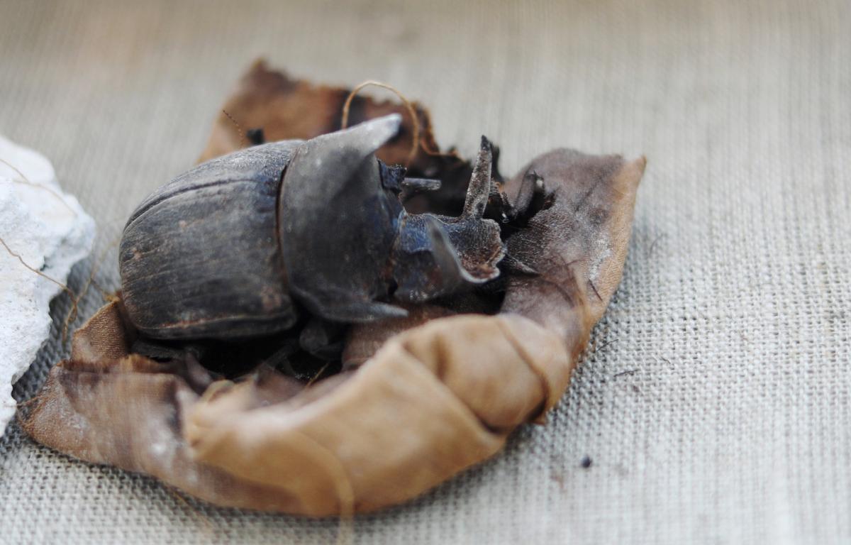 В Египте раскопали мумии жуков-скарабеев