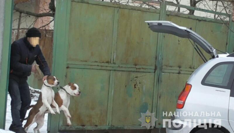 Питбулей, которые летом напали на мужчину, изъяли у владельца (фото)