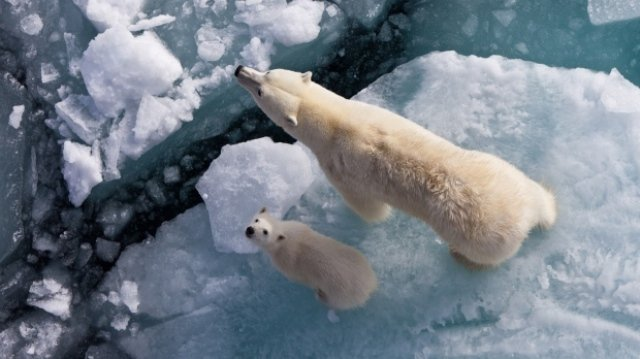 Герои Антарктиды придут в гости к харьковским школьникам