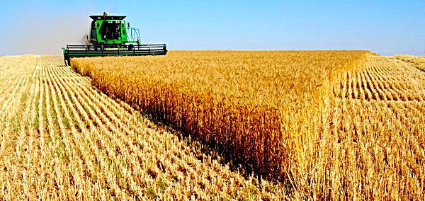 Харківські аграрії намагаються врятувати врожай (відео)