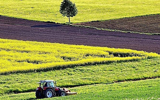 Мораторий на продажу земли могут отменить