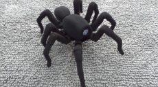 Робот-павук для домашнього використання