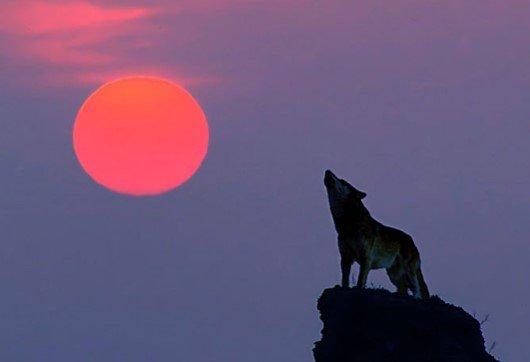 21 января харьковчане смогут наблюдать лунное затмение