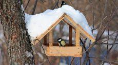 На Харківщині зимує близько 50 видів птахів (відео)