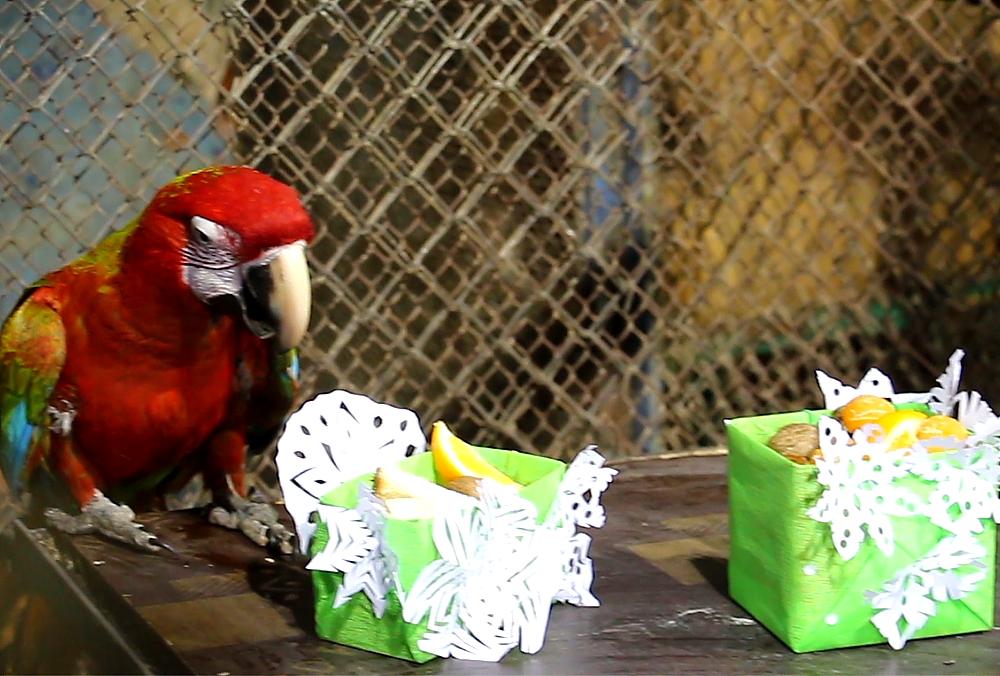 Тварини Харківського зоопарку отримали новорічні смаколики (відео)
