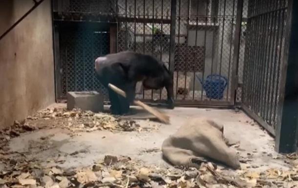 В Китае обезьяны научились убирать за собой (видео)