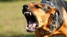 На Харківщині господар собак, які ледь не загризли людину, буде відповідати перед законом (відео)