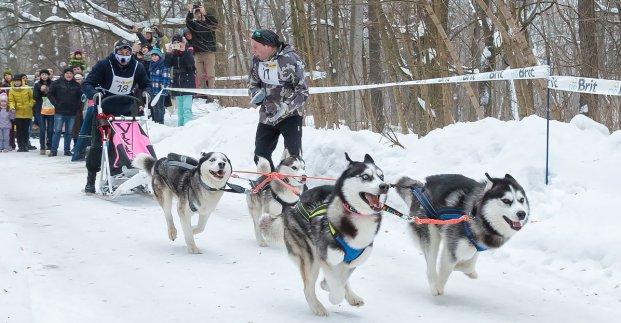 На Харьковщине закачивается сезон гонок на ездовых собаках