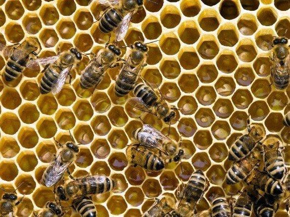 Пчелы-математики: ученые научили насекомых прибавлять и вычитать