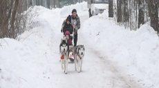 Собачьи гонки или ездовой спорт на Winter Dog Fest 2019