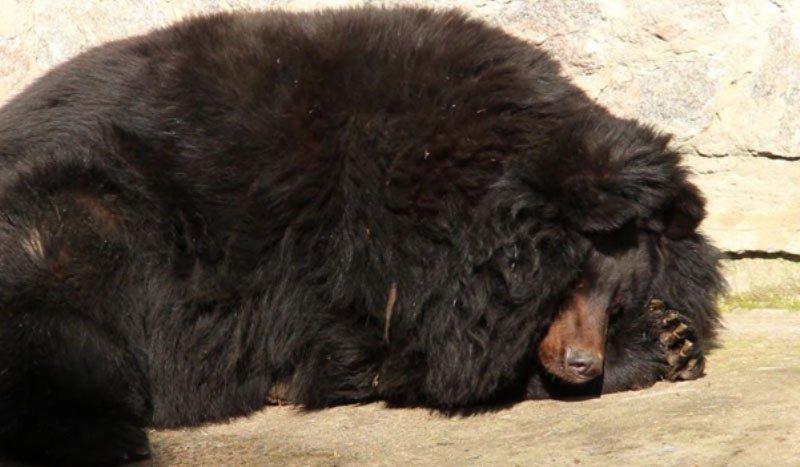 В Харьковском зоопарке проснулись медведи (видео, фото)