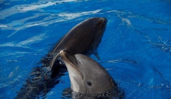 В Черном море пересчитают дельфинов с неба