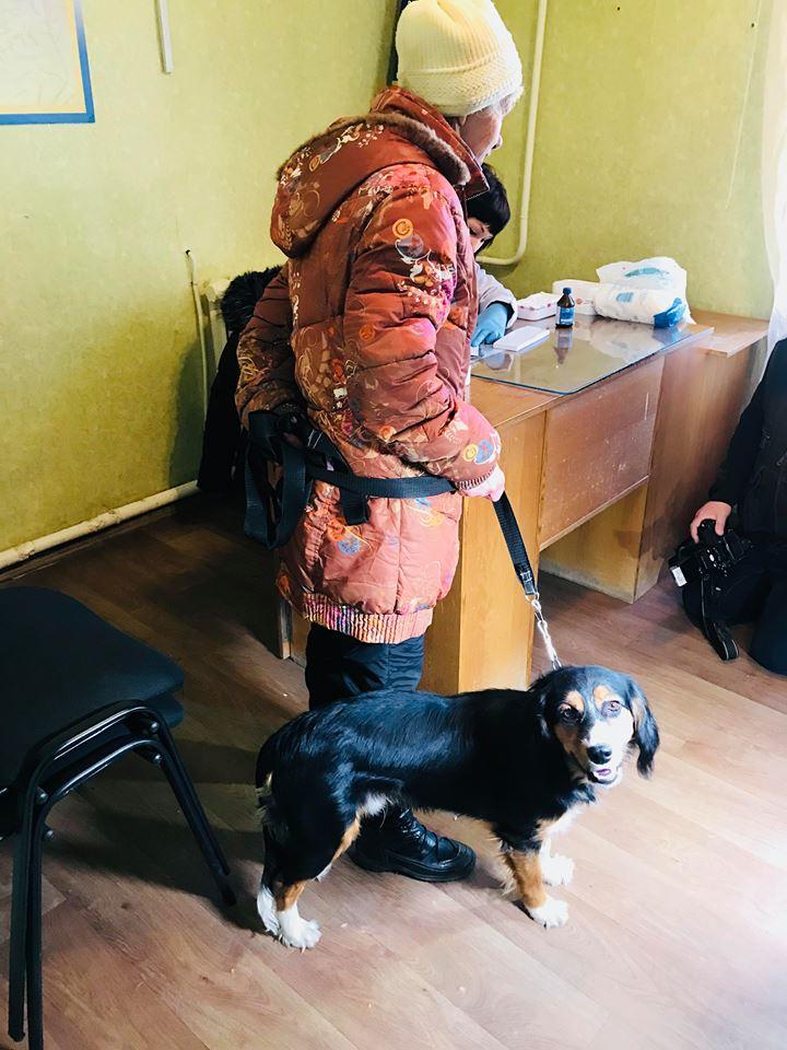 У Харкові почалася планова вакцинація домашніх тварин від сказу (відео)