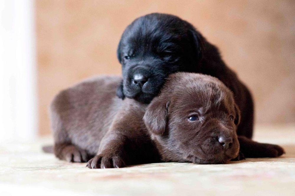 У Харкові врятували собаку з п'ятьма цуценятами (відео)