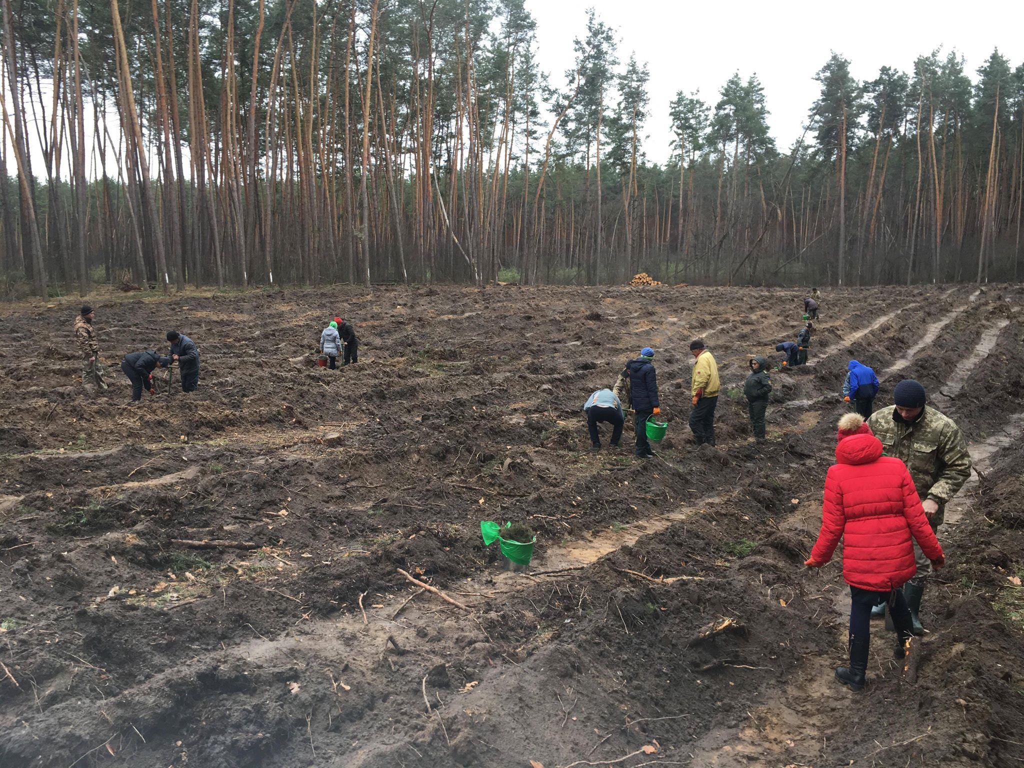 «Будущее леса в твоих руках»: на Харьковщине началась всеукраинская экологическая акция (фото)