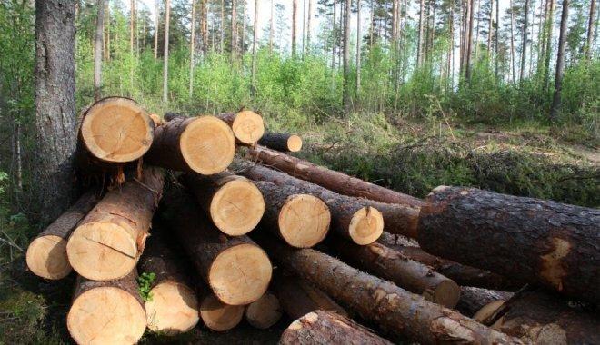 В Харькове потратят миллионы гривен на снос деревьев