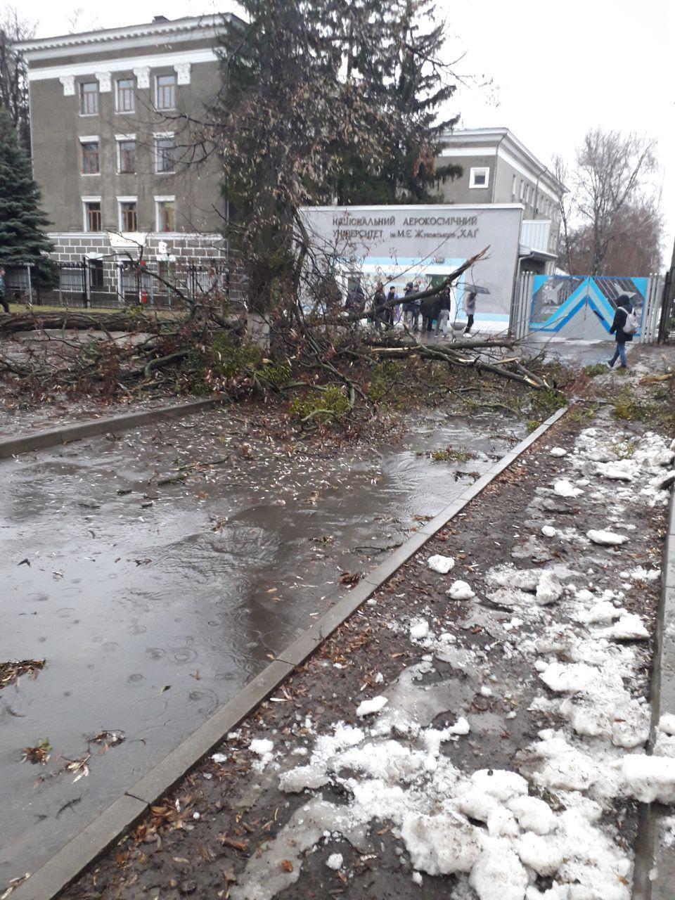 Ураган в Харькове: повалены деревья и торговые палатки (видео)