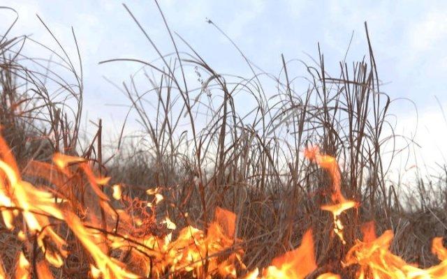 За сутки в области произошло 24 пожара из-за выжигания сухой травы