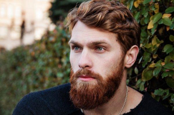 В мужской бороде бактерий больше, чем в собачьей шерсти