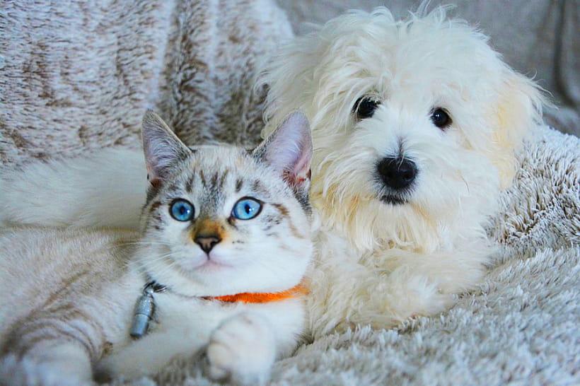 Владельцы собак в два раза счастливее кошатников – ученые