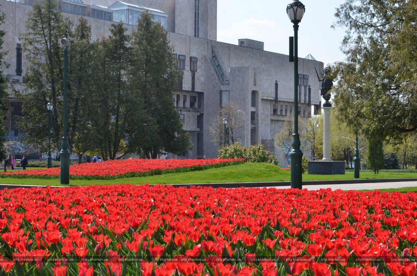 В Харькове высадят два миллиона цветов (фото)