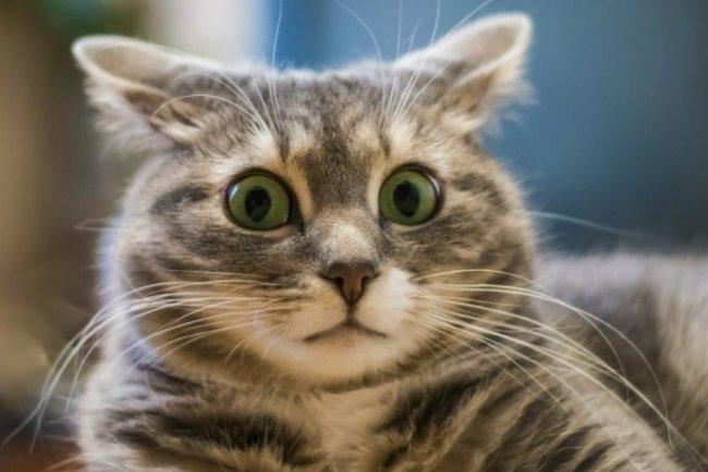 Коты могут распознавать свои имена – ученые