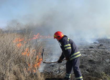 С начала апреля на Харьковщине зафиксировано 600 случаев горения сухостоя