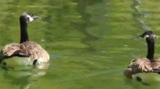 Еще 88 млн гривен выделили на харьковский зоопарк