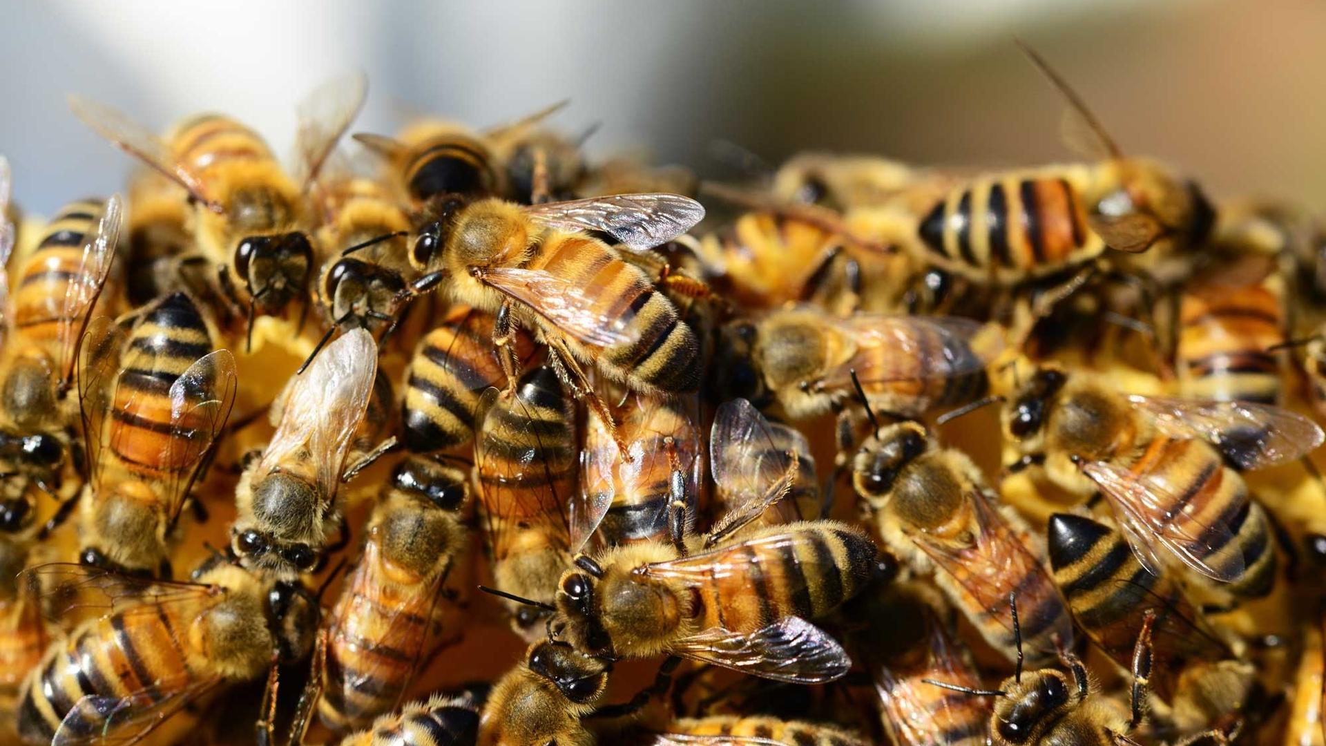 Полиция расследует массовое отравление пчел на Харьковщине