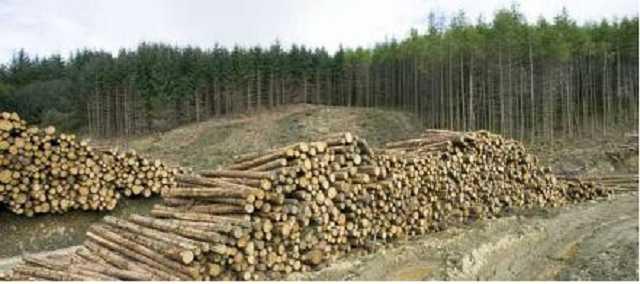 «Лесные схемы», – о коррупции в лесных хозяйствах расскажут на телеканале «Симон»