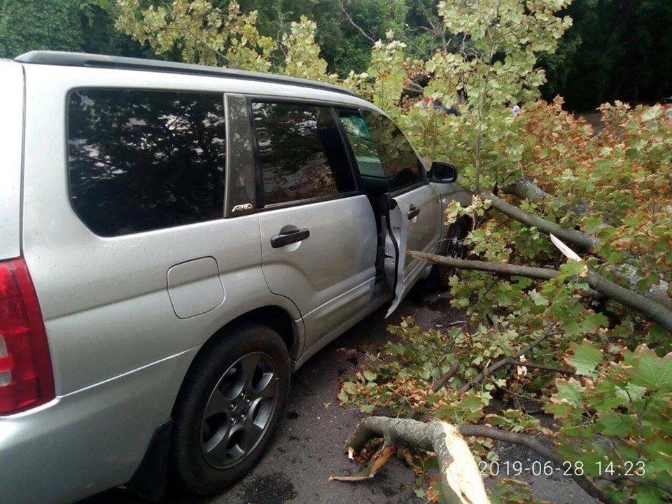 В Харькове дерево упало на автомобиль во время движения: пассажир – в шоковом состоянии (фото)