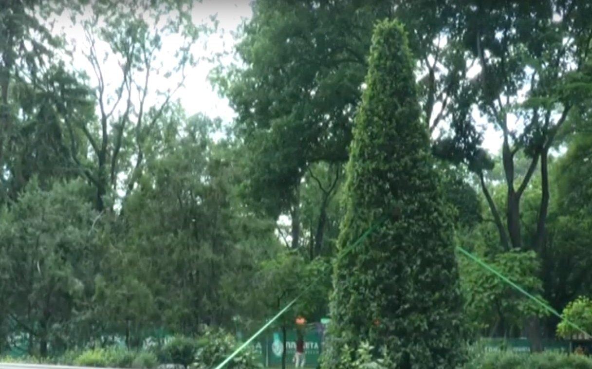 У Харкові чиновники витратили на дерева 15 мільйонів гривень (відео)