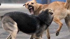 Бездомные собаки стали чаще кусать харьковчан