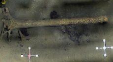 На дне Балтики исследователи нашли затонувший лес